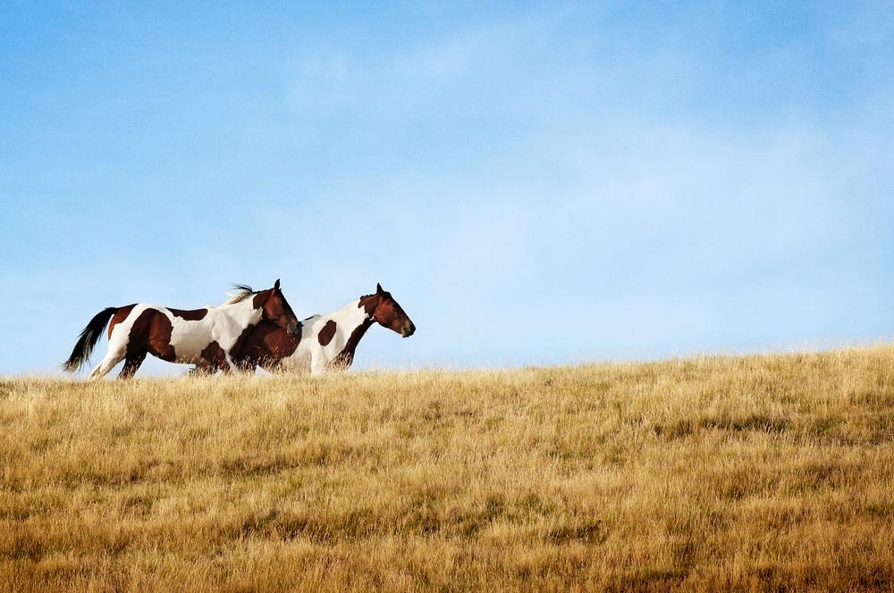 JR_Horses_jfr_NZ_110102_094_VOG_Fl.jpg