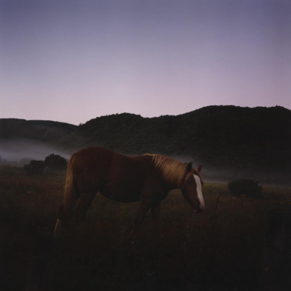horse12 .jpg