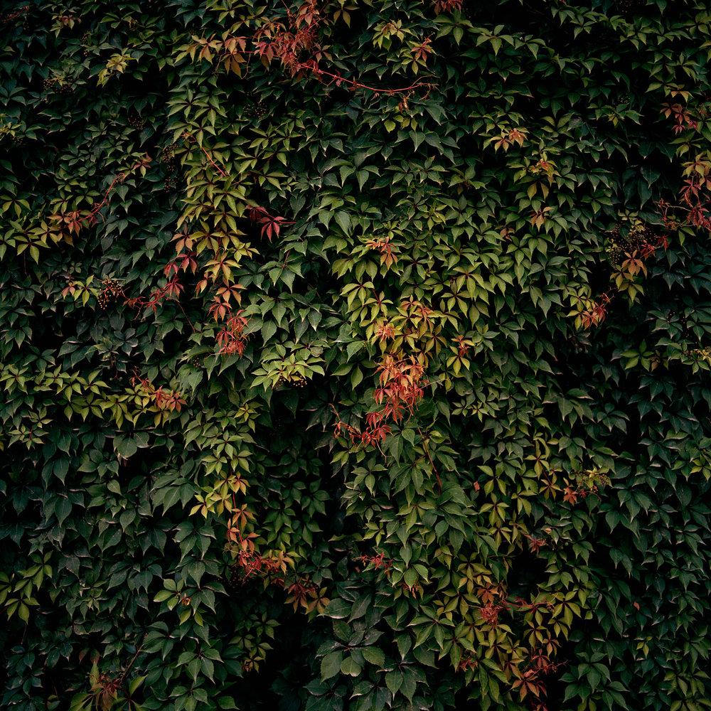 "LEAVES (MEXICO), 2005 | 42 x 42"""
