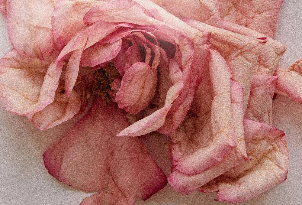 DS_DURGA_Rose.jpg