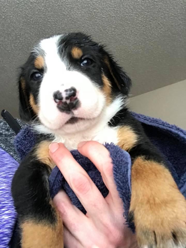 new puppy4.jpg