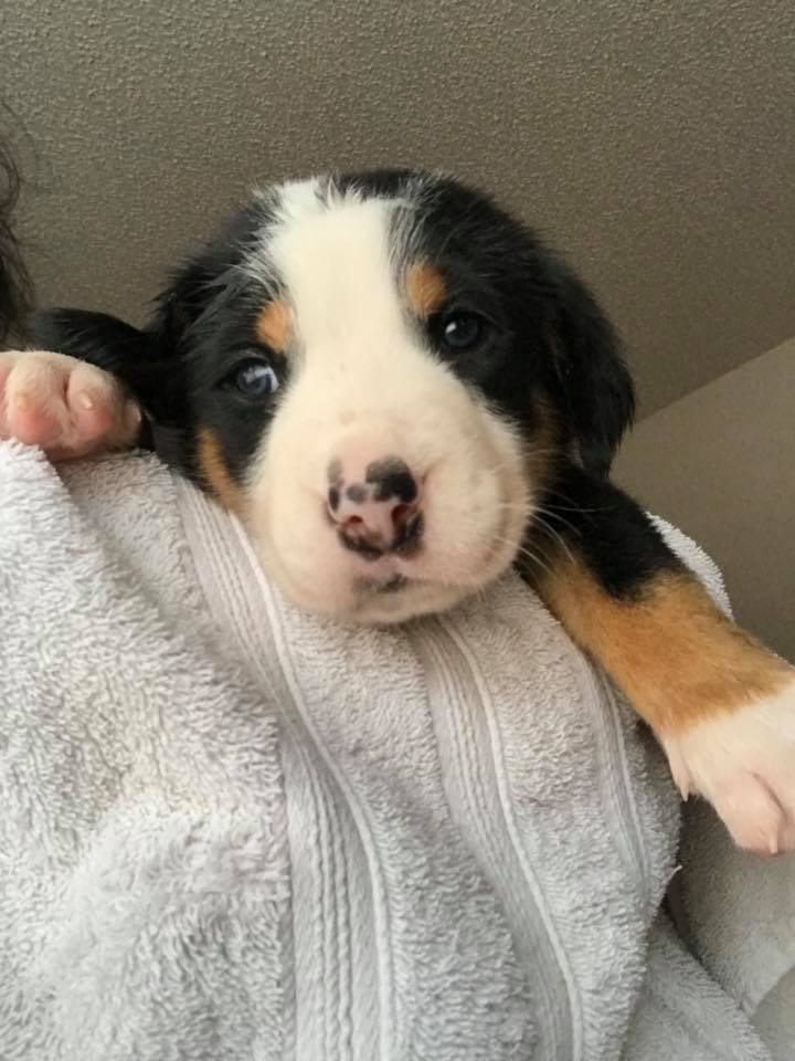 new puppy3.jpg