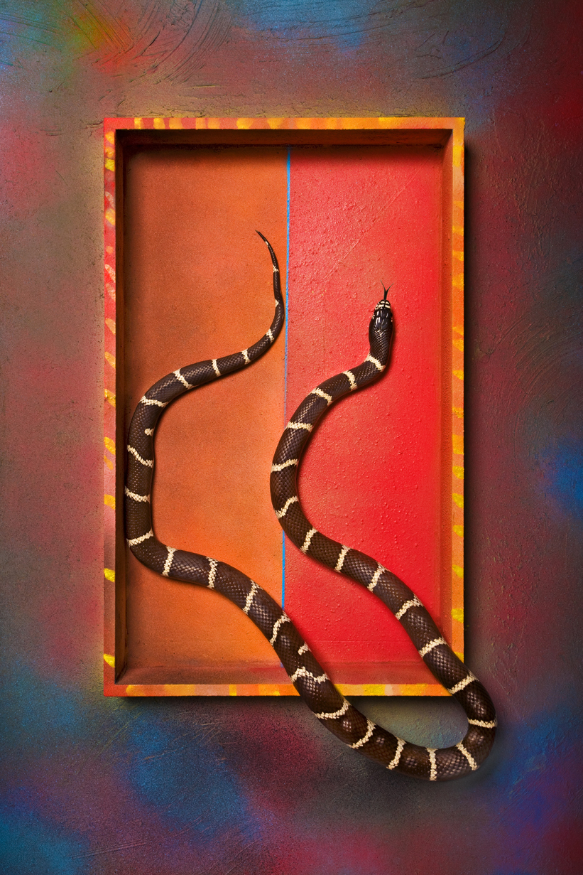 Boxed Snake
