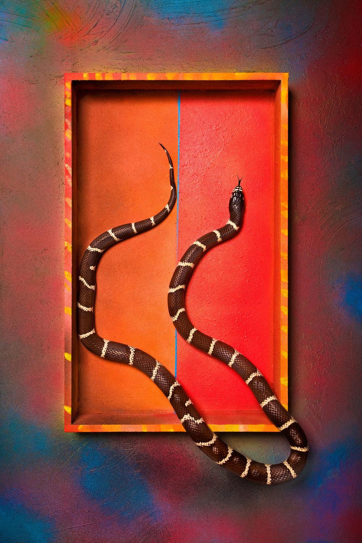 boxed_snake_1500.jpg