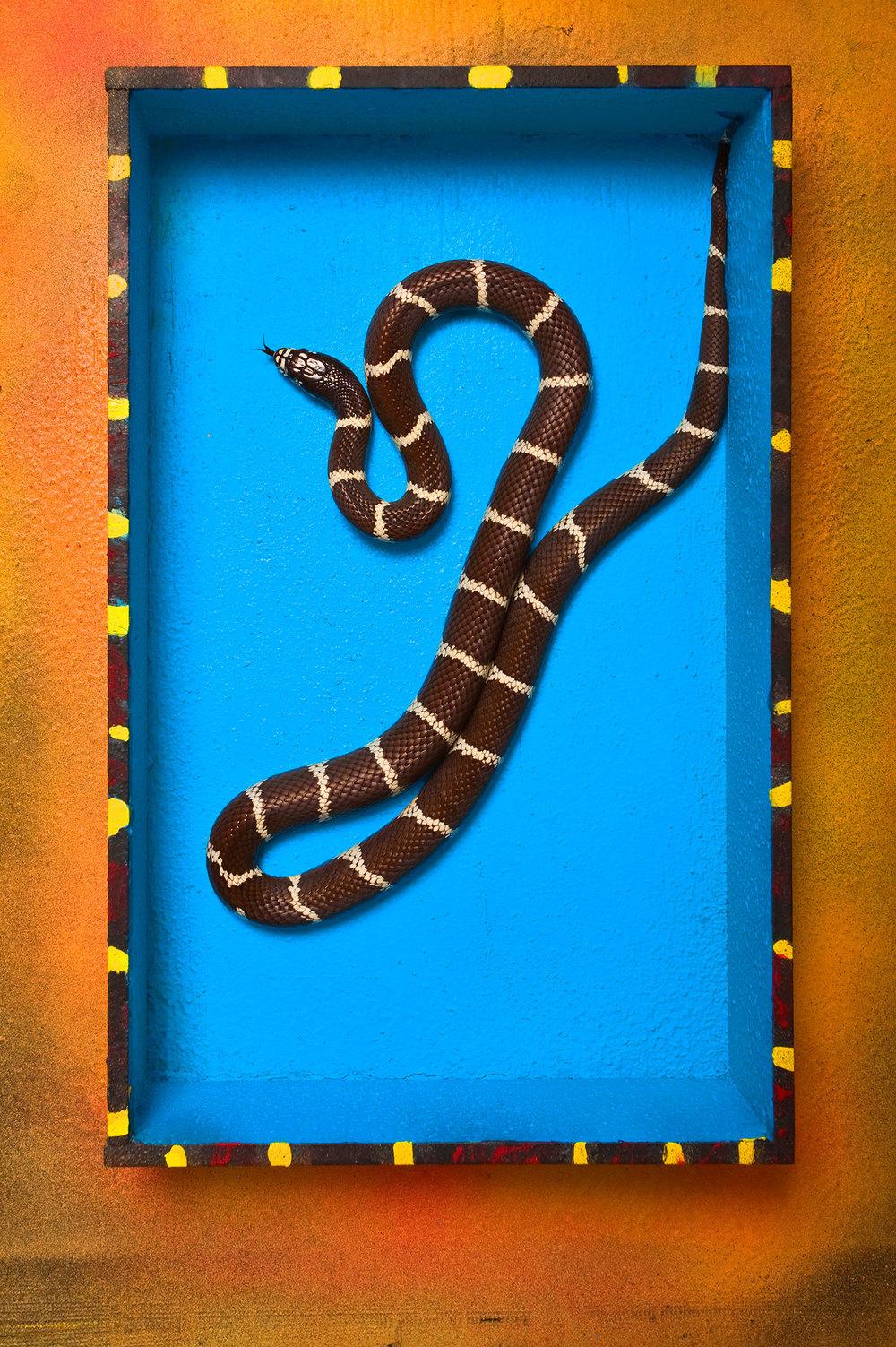 boxed_snake_2-1599.jpg