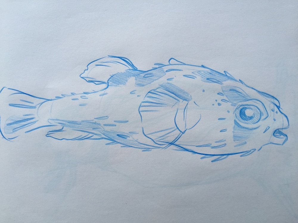 pufferfish sketch.jpg