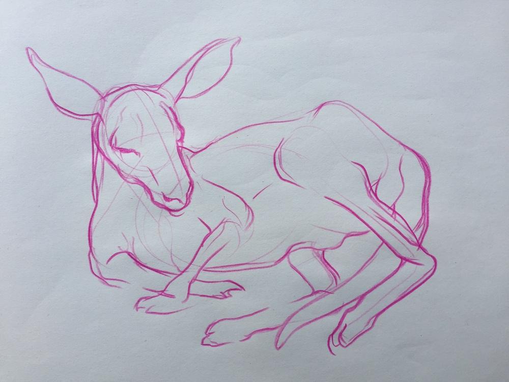 kangaroo sketch.jpg