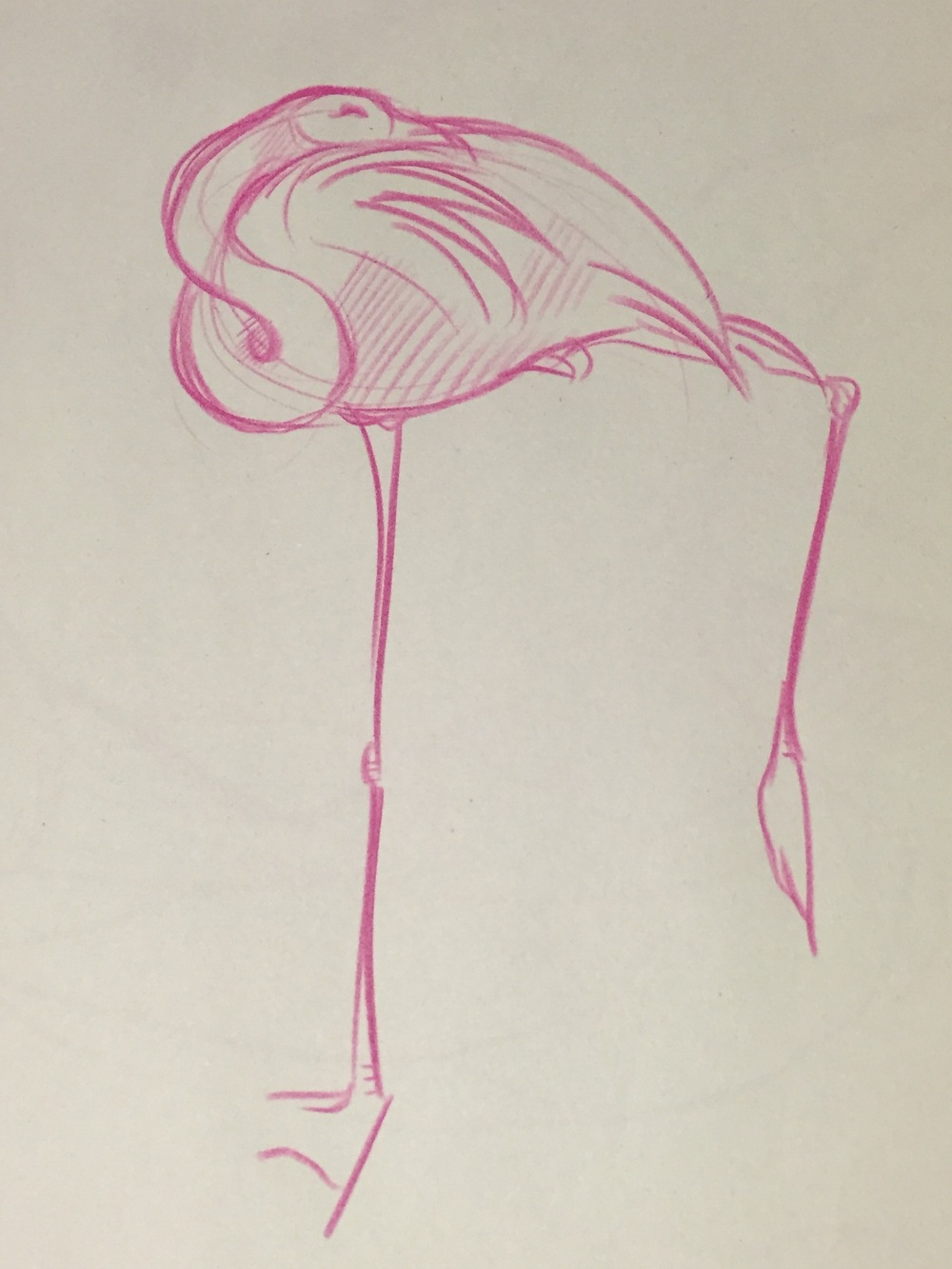flamingo sketch.JPG