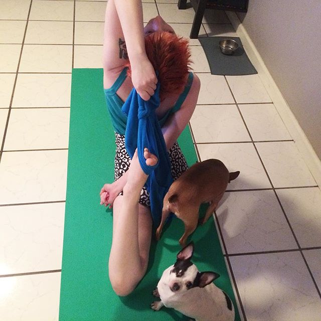 Yoga time and it's all about Misti. Once your dogs practice doga, be prepared to share your mat. Every time you pull it out. Lol #yogawithdogs #yogadogs #fitdogsofig #dallasyoga #weeklyfluff #puppylove