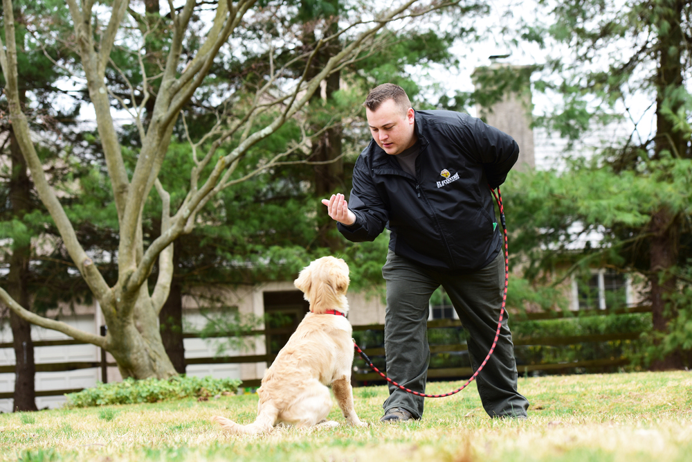 Dog Trainer, Gladwyne, Main Line, Positive, At Attention Dog Training - 1
