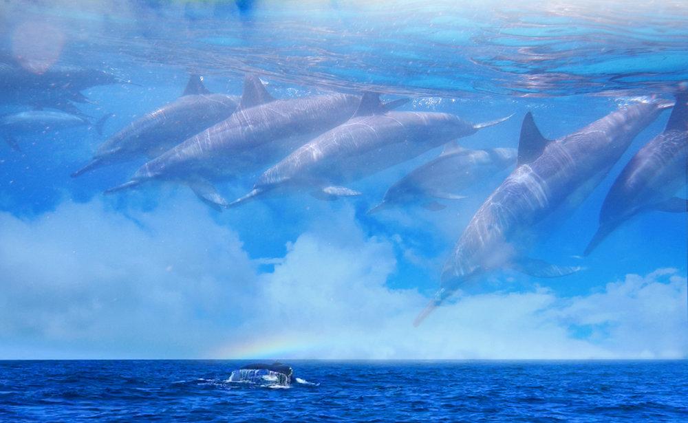 dolphinbreath.jpg