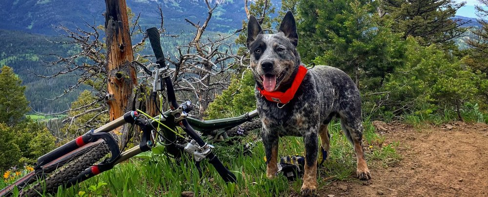 Rad Dog Bike.jpg