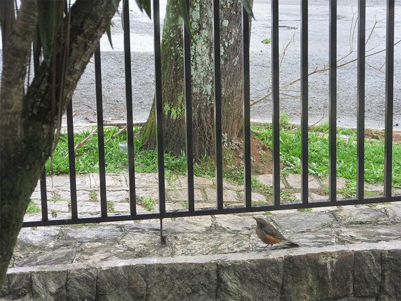 coworking-passarinho