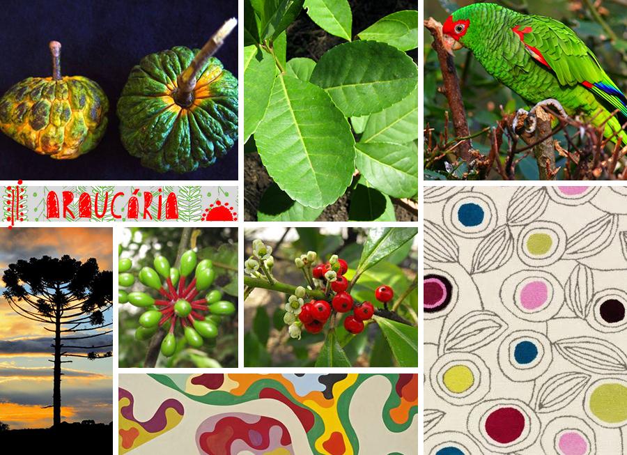 ccerantola_moodboard_floresta_araucaria
