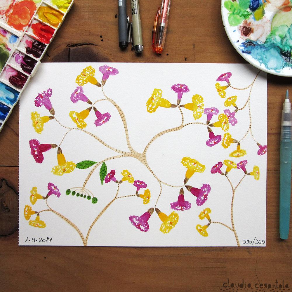 claudia-cerantola-araucaria-350.jpg