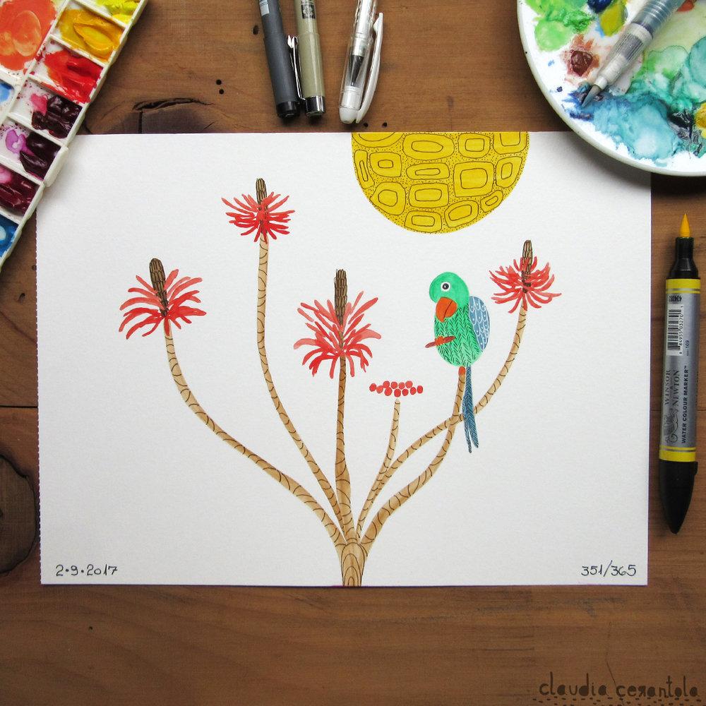 claudia-cerantola-araucaria-351.jpg