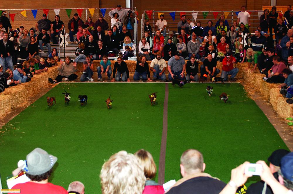 Weiner dogs good HR.jpg