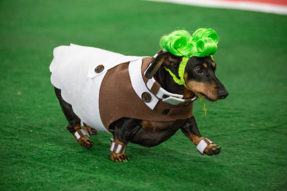 WIENER DOG RACES - SUNDAY, OCT. 6