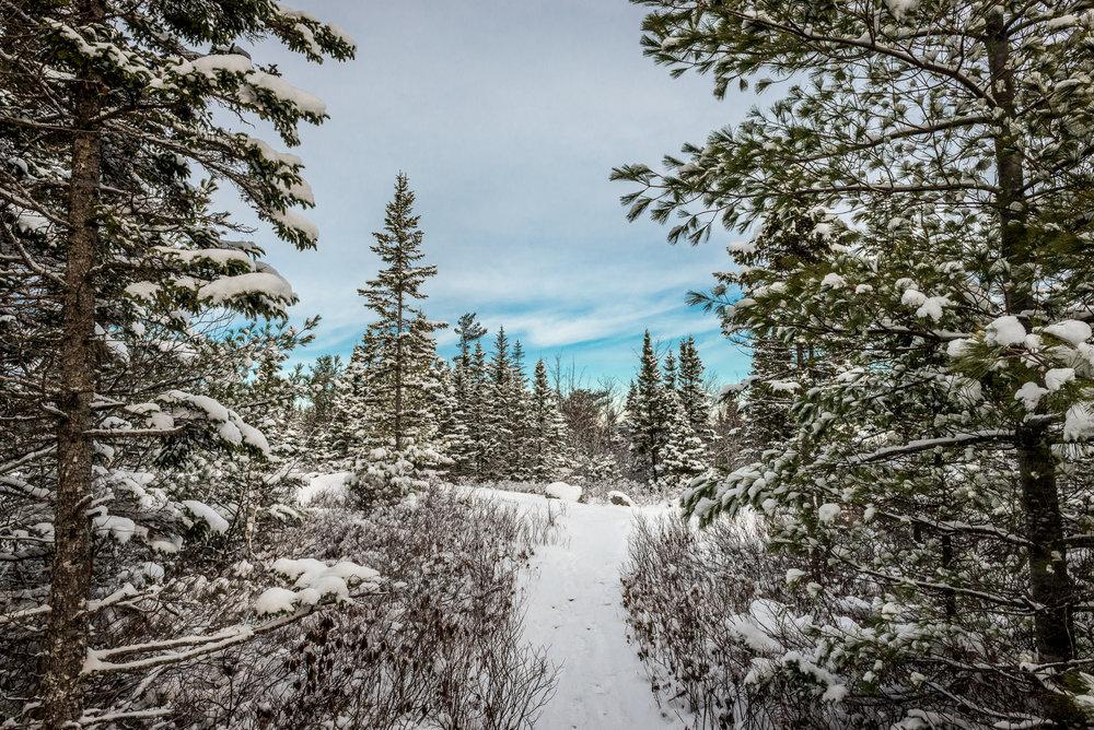 Fox Lake Trail, Blue Mountain Wilderness trails