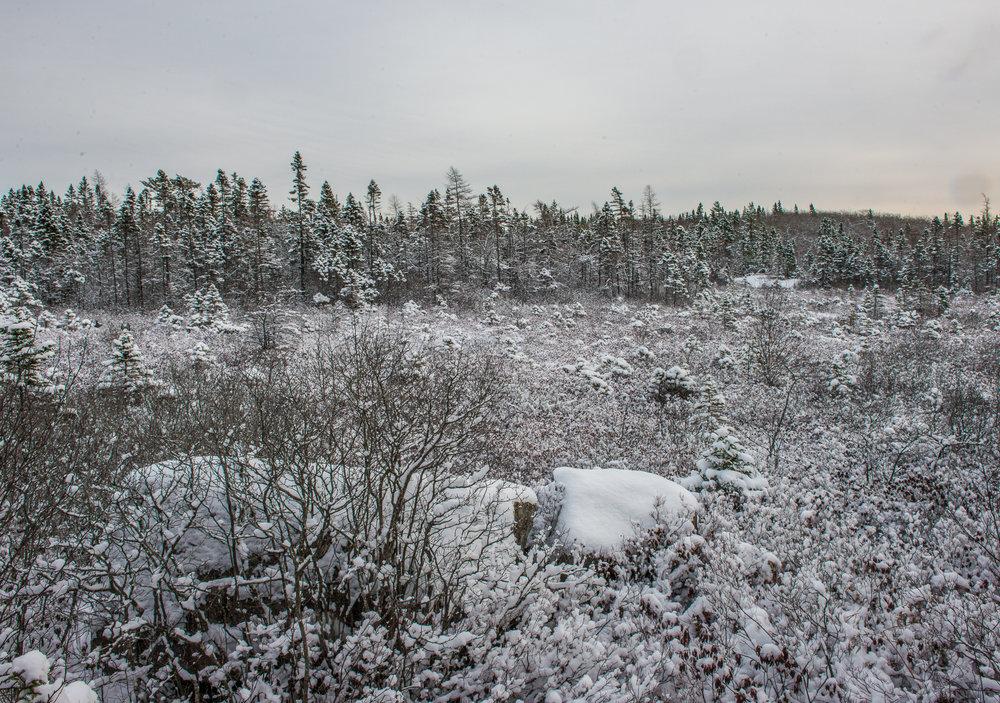 Coyote Bog, Blue Mountain Wilderness Trails. Nova Scotia