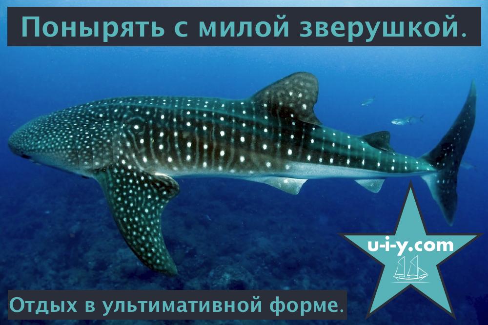 UIY_banner_02_whaleshark.jpg