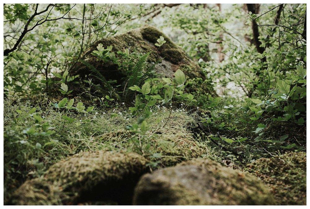 Cloumbia Rive Gorge_0029.jpg