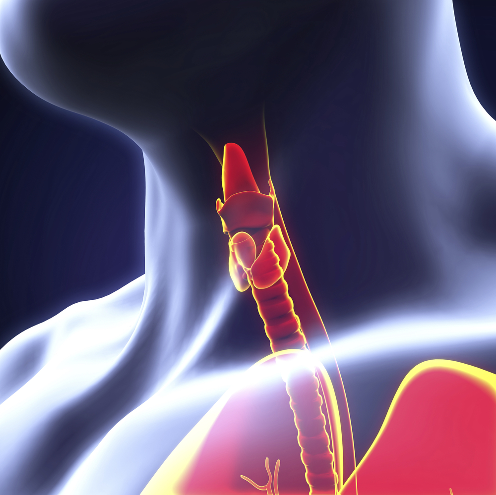 thyroid optimization