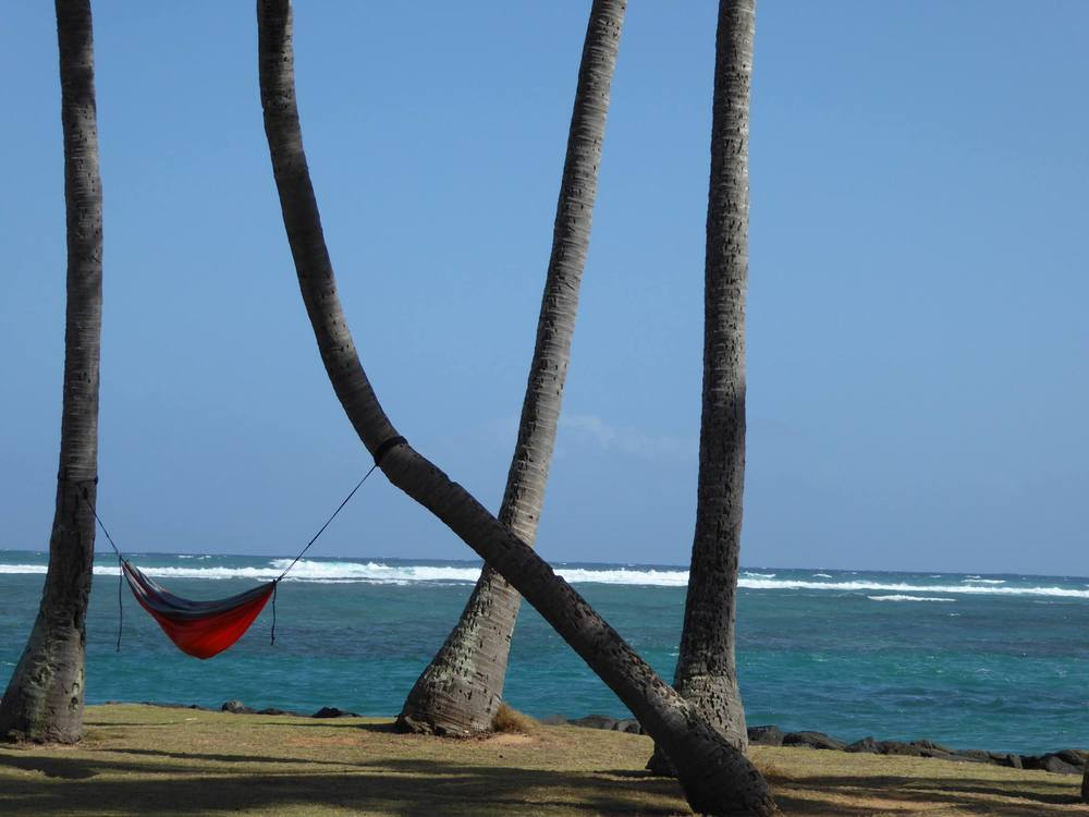 palm tree hammock.jpg