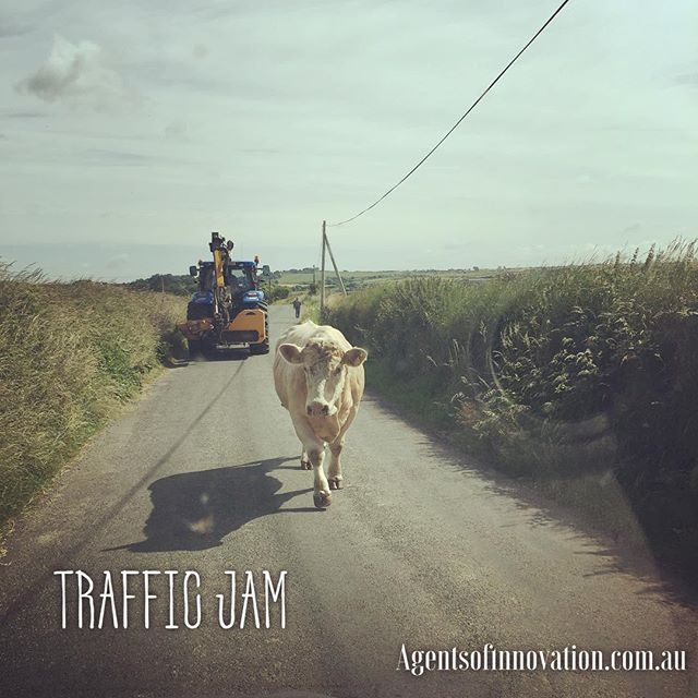 Expect the unexpected! Sometimes you just have to stop and appreciate the hurdles in front of you.  #instagood #igers #me #biz #entrepreneur #youfirst #traffic #ireland #cow #picoftheday #life #change #stop #myjob #ilovemyjob #instadaily #follow #smile #smelltheroses #start