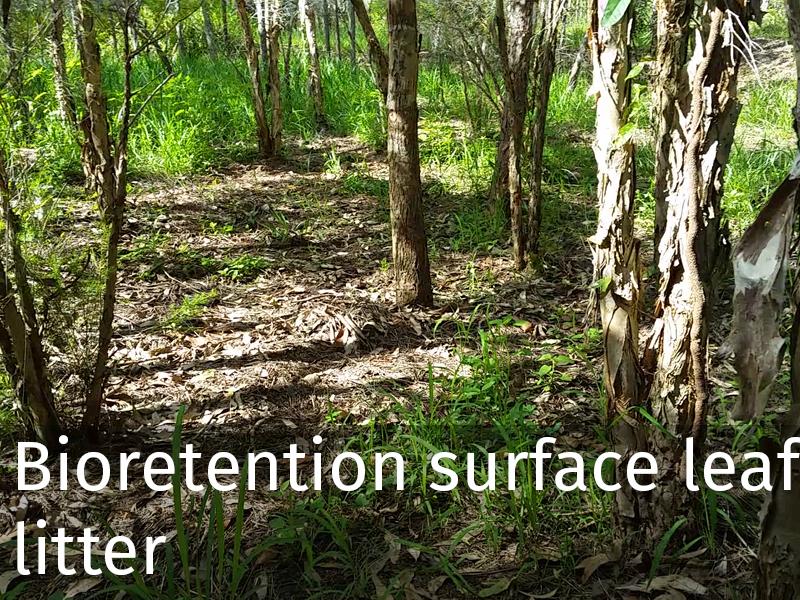 20150102 0045 Bioretention surface_leaf litter.jpg