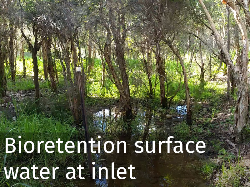 20150102 0049 Bioretention surface_water at inlet.jpg