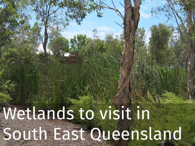 20150102 0062 Wetlands to visit in South East Queensland.jpg