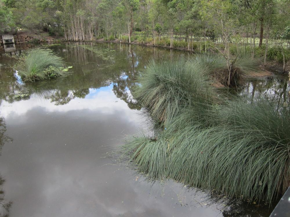 Daintree Drive Wetland