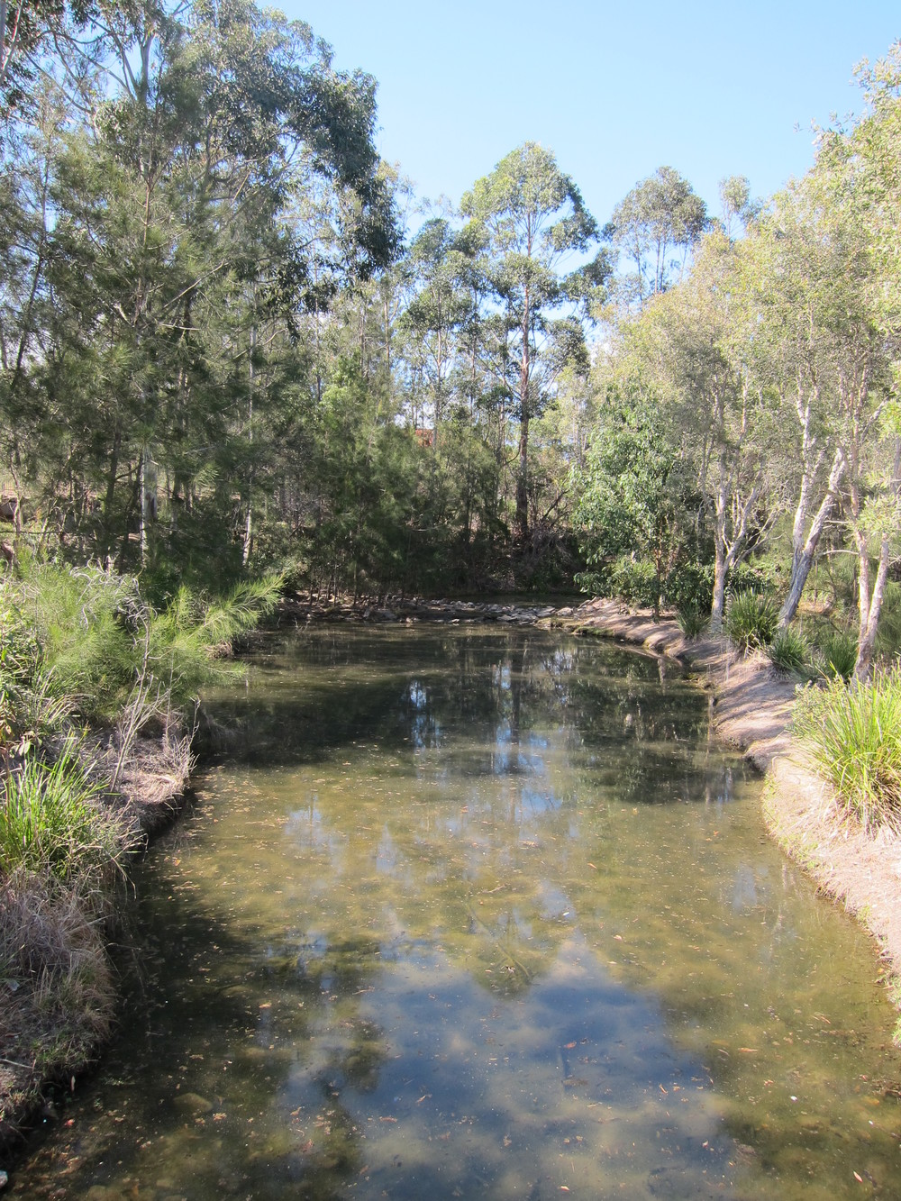 Roseneath Drive Wetland