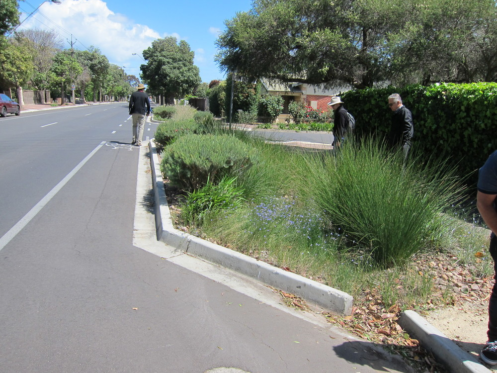 Wattle St Bioretention System