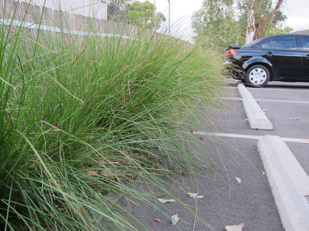 Parkside Drive Bioretention System