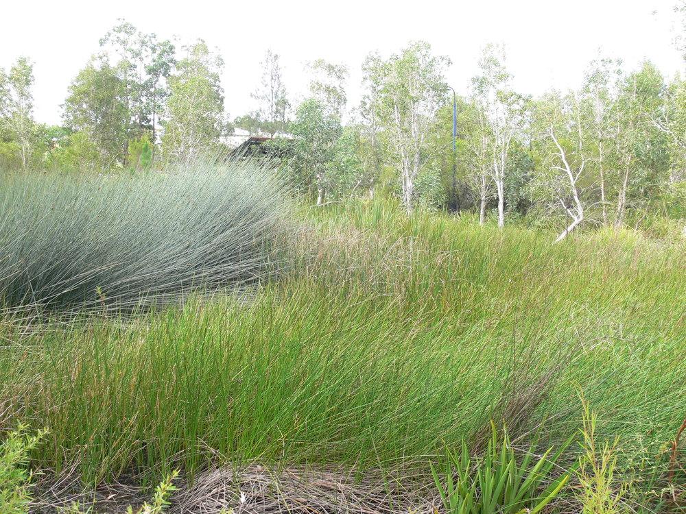 Ceil Circuit Wetland
