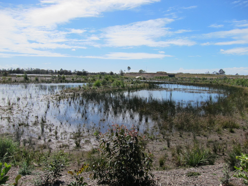 Kalgoorlie St Wetland