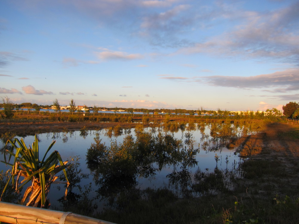 Southport Broadwater Parklands Mangrove Wetland