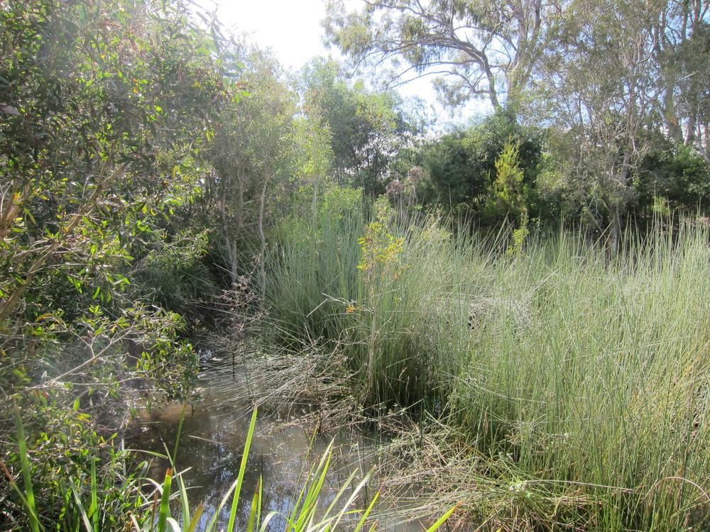 Sandalwood St Wetland