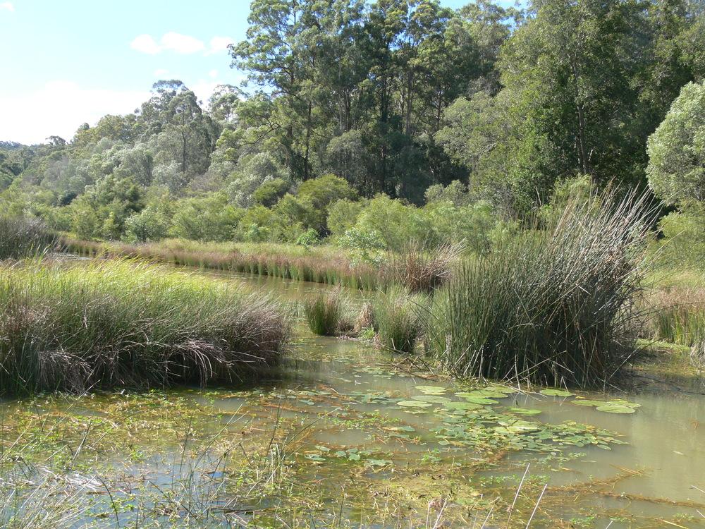 John Markwell Parade Wetland