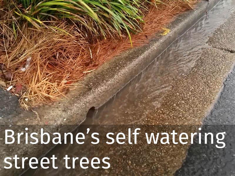 20150102 0089 Brisbanes self watering street trees.jpg