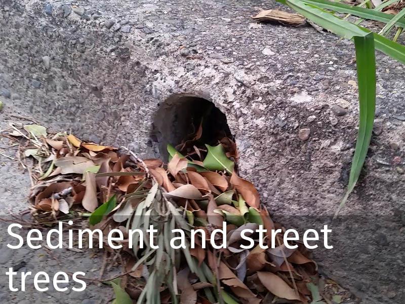 20150102 0090 Sediment and street trees.jpg