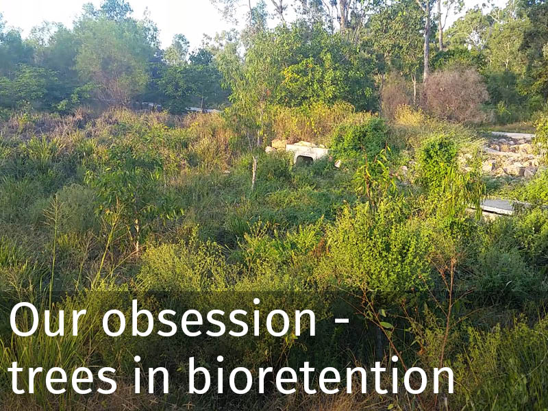 20150102 0093 Our obsession - trees in bioretention.jpg