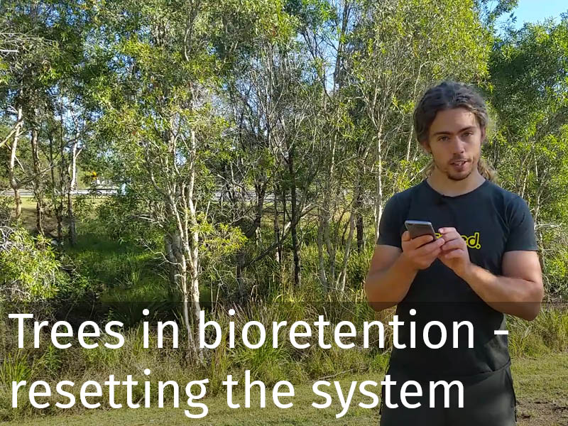 20150102 0108 Trees in bioretention - resetting the system.jpg