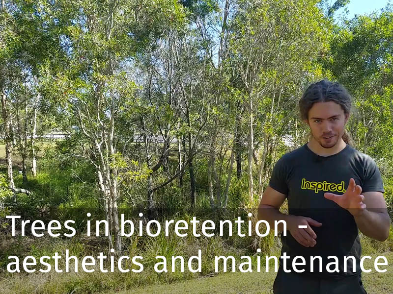 20150102 0110 Trees in bioretention - aesthetics and maintenance.jpg