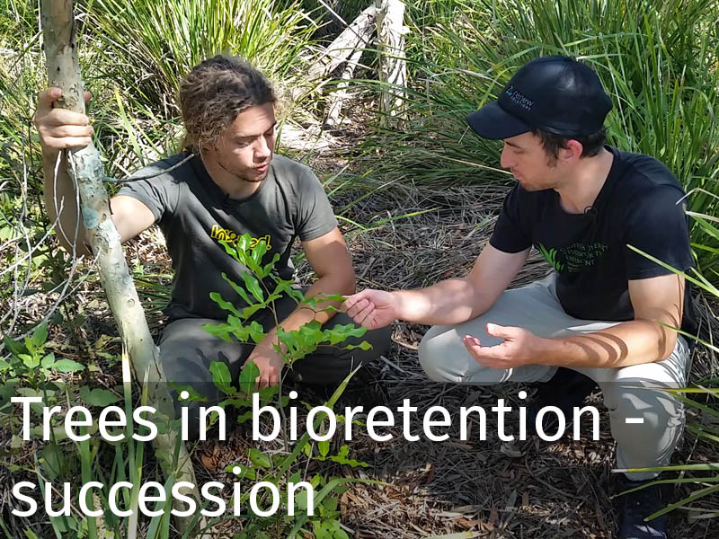 20150102 0111 Trees in bioretention - succession.jpg