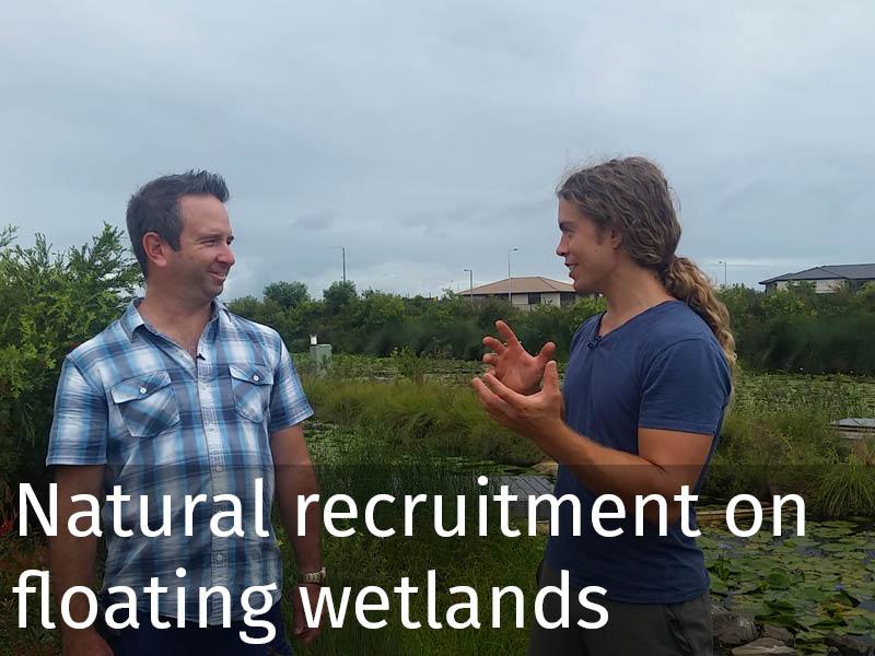 20150102 0135 Natural recruitment on floating wetlands.jpg