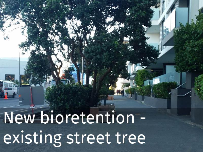 20150102 0156 New bioretention - existing street tree.jpg