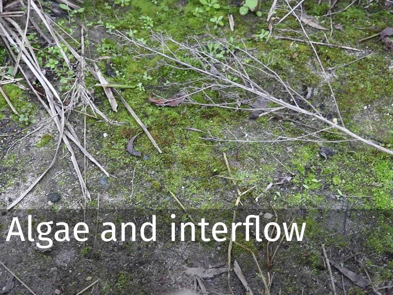 20150102 0171 Algae and interflow.jpg